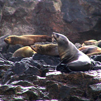 Seal Rocks are named after its residents